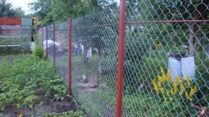 Забор из сетки-рабица-3