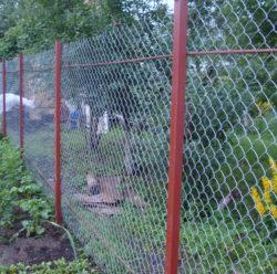 Забор из сетки-рабица-5